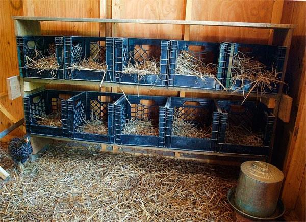 гнезда для кур из пластиковых ящиков