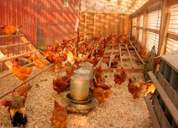бизнес на домашних яйцах