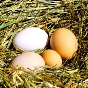 курица несёт мелкие яйца