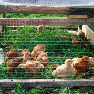 вольер для цыплят