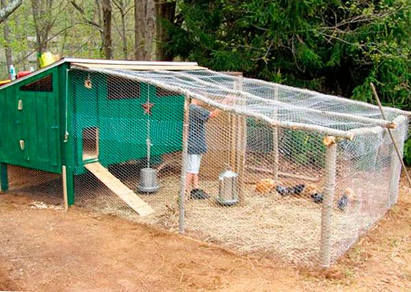 загон для цыплят размеры