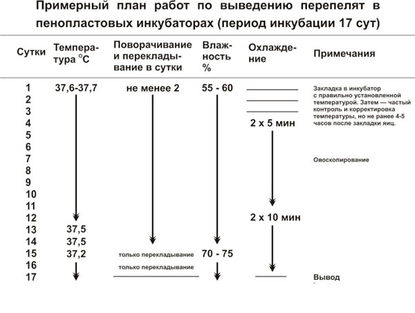 таблица инкубация перепелов