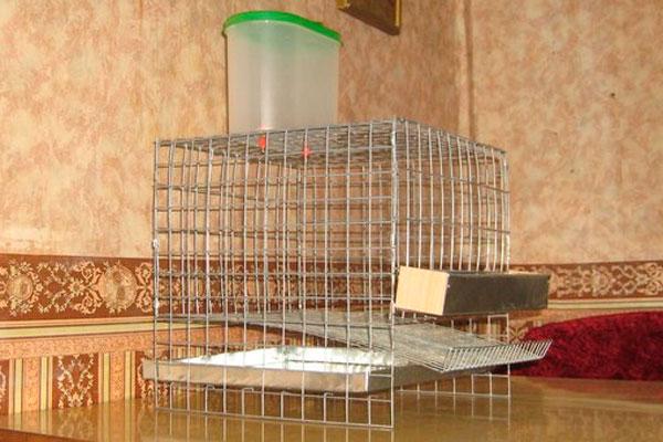Чертежи клеток из сетки для кроликов Сам Себе Строитель 75